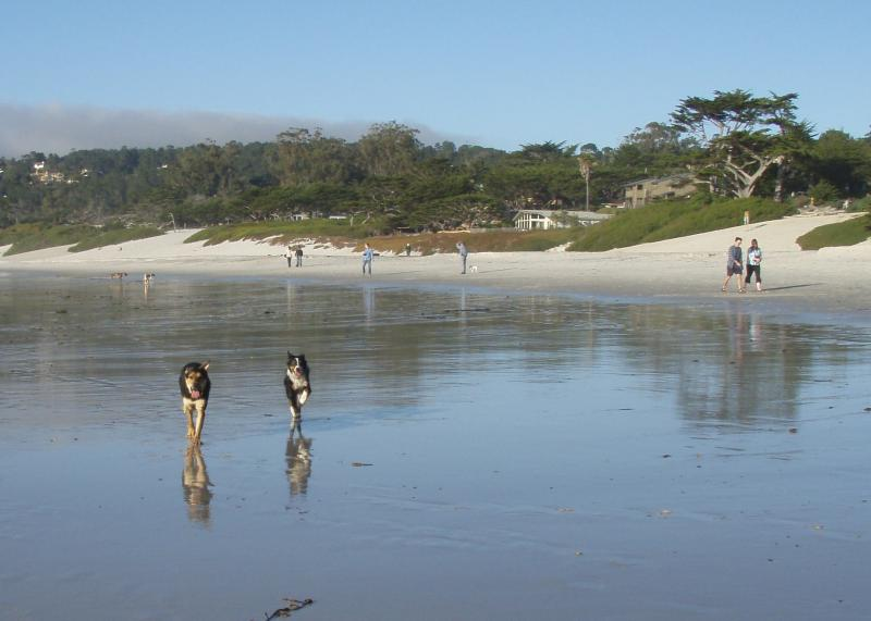 Ellie running free on a Carmel Beach